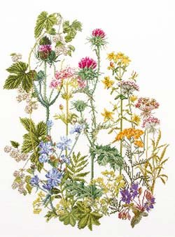 Wild flowers by Thea Gouverneur
