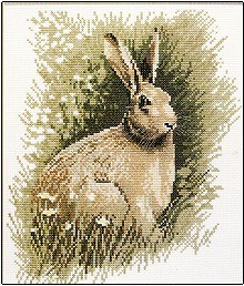 Brown Hare by John Stubbs - Wildlife Collection