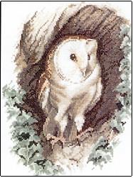 Barn Owl by John Stubbs - Wildlife Collection