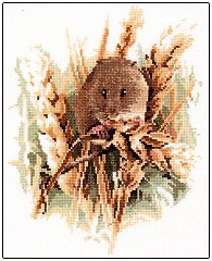 Harvest Mouse by John Stubbs - Wildlife Collection