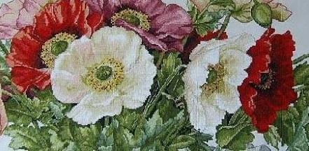 Poppies,K-33, by Merejka