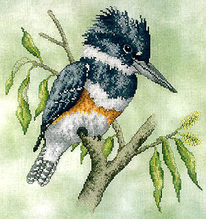 Belted Kingfisher by Crossed Wing Collection