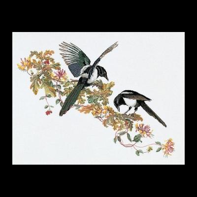 Magpie,GOK1075,The Gouverneur