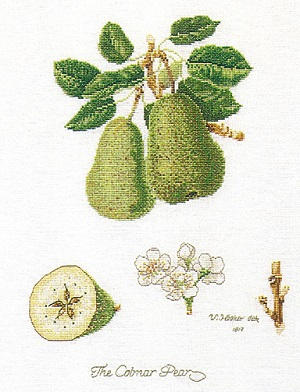 Pears by Thea Gouverneur