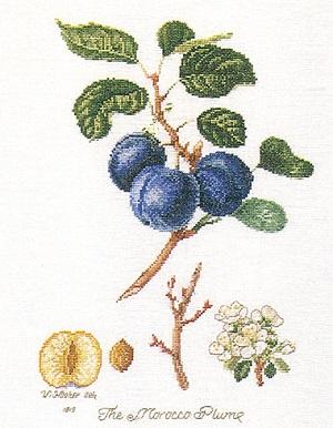 Morocco plum by Thea Gouverneur