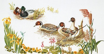 Ducks in the march by Thea Gouverneur
