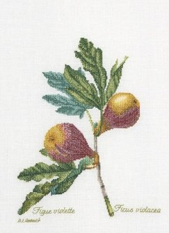 Figs by Thea Gouverneur
