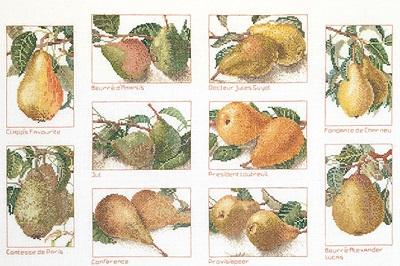 Pears,GOK2097,Thea Gouverneur