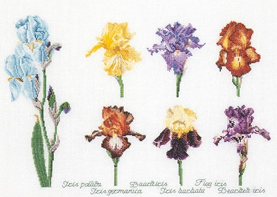 Iris assortment by Thea Gouverneur