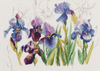 Blue irises by Lanarte