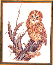 Owl by Eva Rosenstand