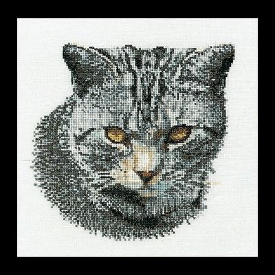Cyprian Cat,GOK932,Thea Gouverneur