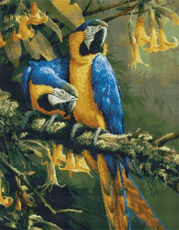 Blue Gold Macaws-9944- by Kustom Krafts