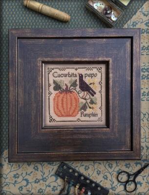 Pumpkin - Botanical Stitches by The Drawn Thread
