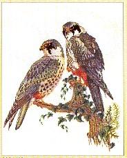 Falcons,GOK2024,Thea Gouverneur