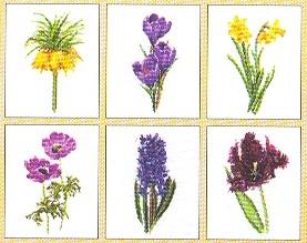 Six Floral Studies,GOK3083,Thea Gouverneur