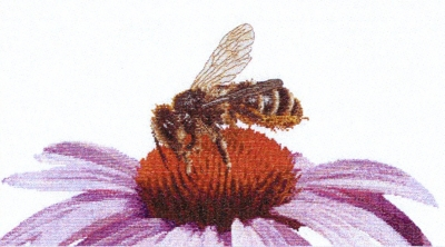 Bee on Echinacea,GOK549,Thea Gouverneur