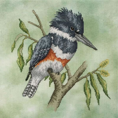 Crossed Wing Collection Belted Kingfisher