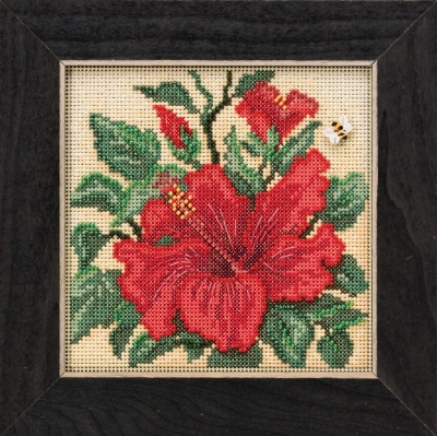 Hibiscus,MH141915,Mill Hill