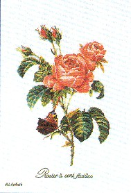 Roses by Thea Gouverneur