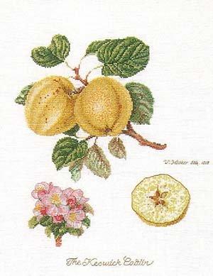 Apples by Thea Gouverneur