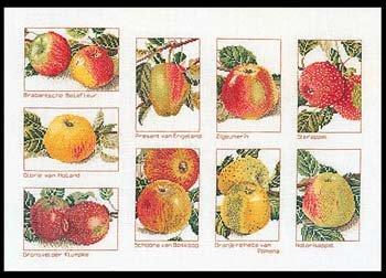 Apples, GOK2082,Thea Gouverneur