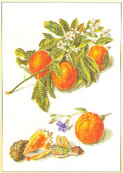 Oranges and blossoms by Thea Gouverneur