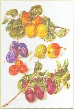 Assortment Of Fruit by Thea Gouverneur