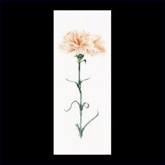 Carnation peach,GOK468,Thea Gouverneur