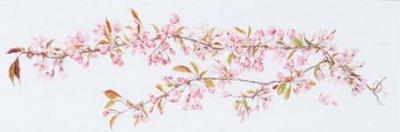 Sakura by Thea Gouverneur