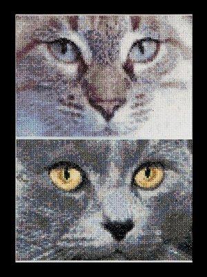Cats- Jack& Luna by Thea Gouverneur