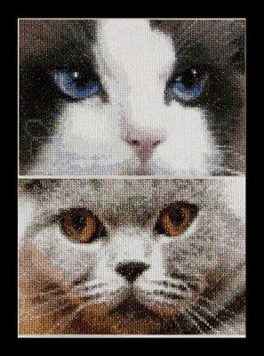 Cats- Smokey& Blu by Thea Gouverneur