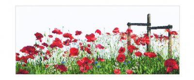 Poppies by Thea Gouverneur