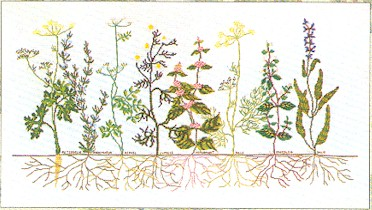Floral Cross-section by Thea Gouverneur