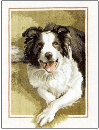 Border Collie - John Stubbs Dog Collection