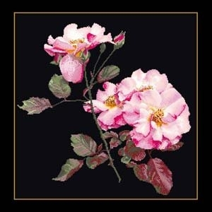 Pink roses by Thea Gouverneur