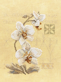 Three orchids by Lanarte